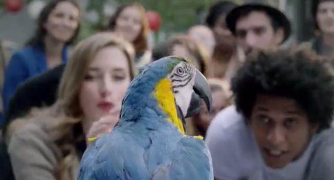 skoda parrot